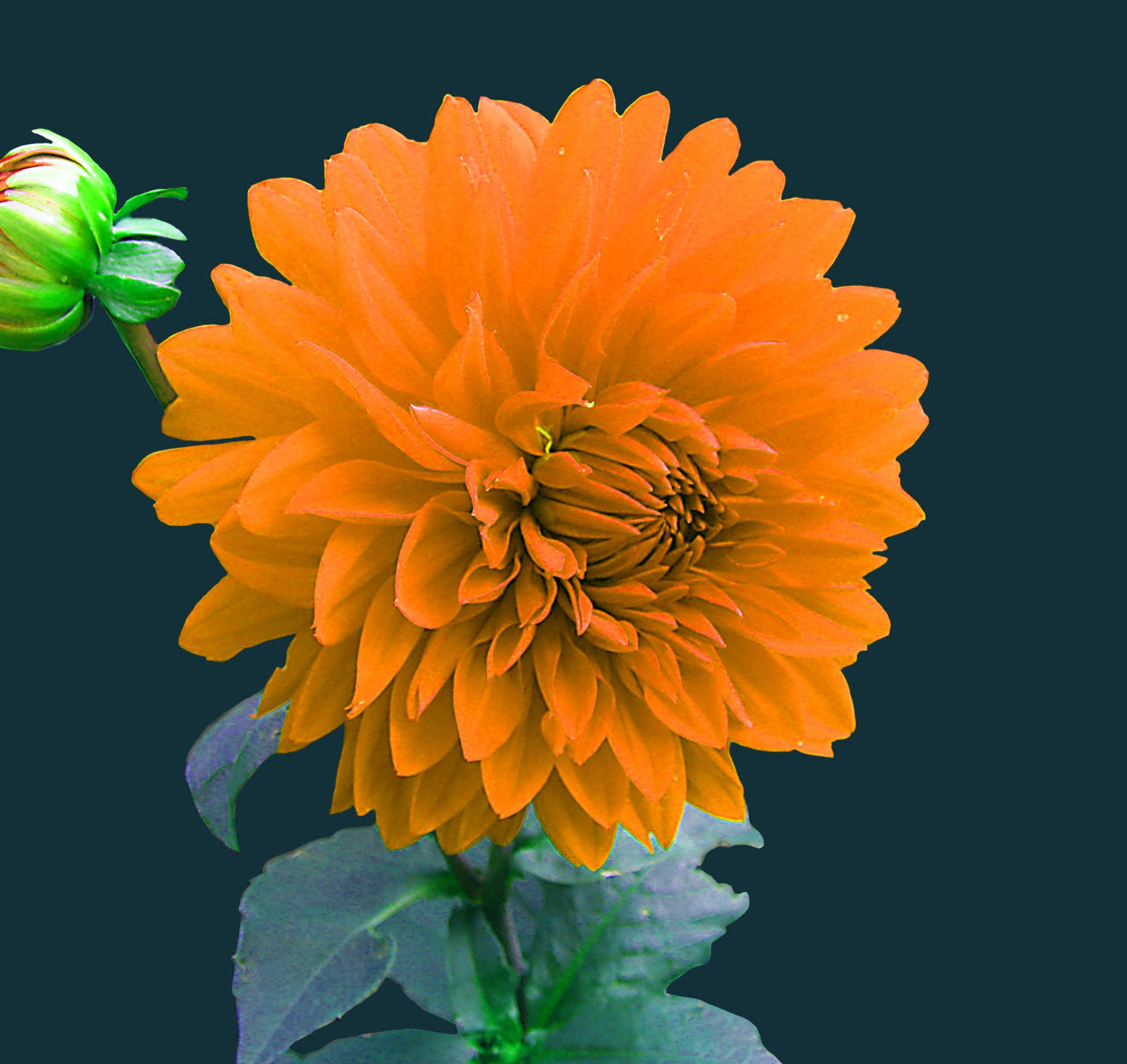 Best Quality Flower DP Images