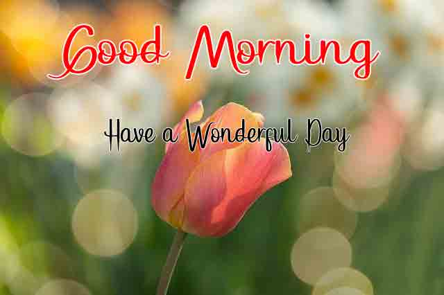 Best Quality Good Morning All Images 2