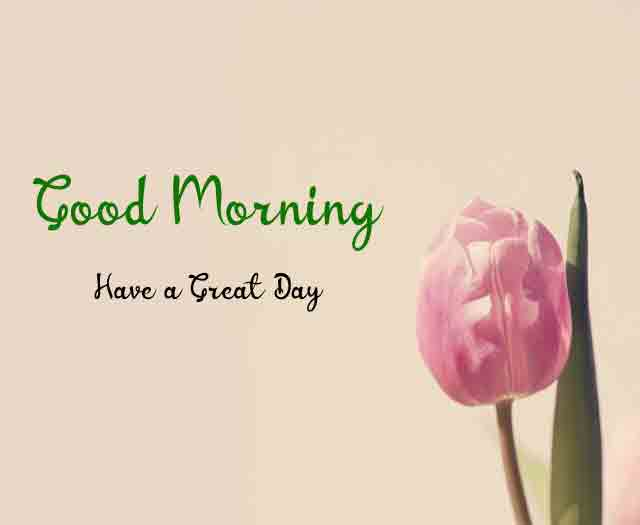 Best Quality Good Morning All Images 3