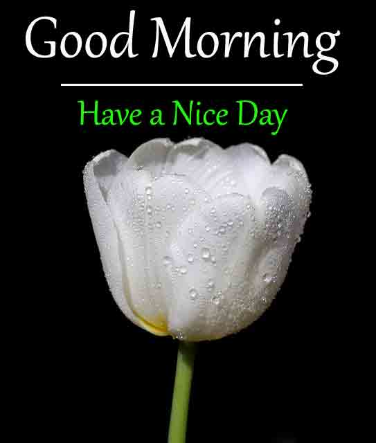 Best Quality Good Morning All Images