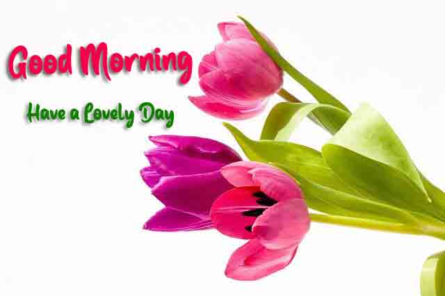 Best Quality Good Morning All Wallpaper
