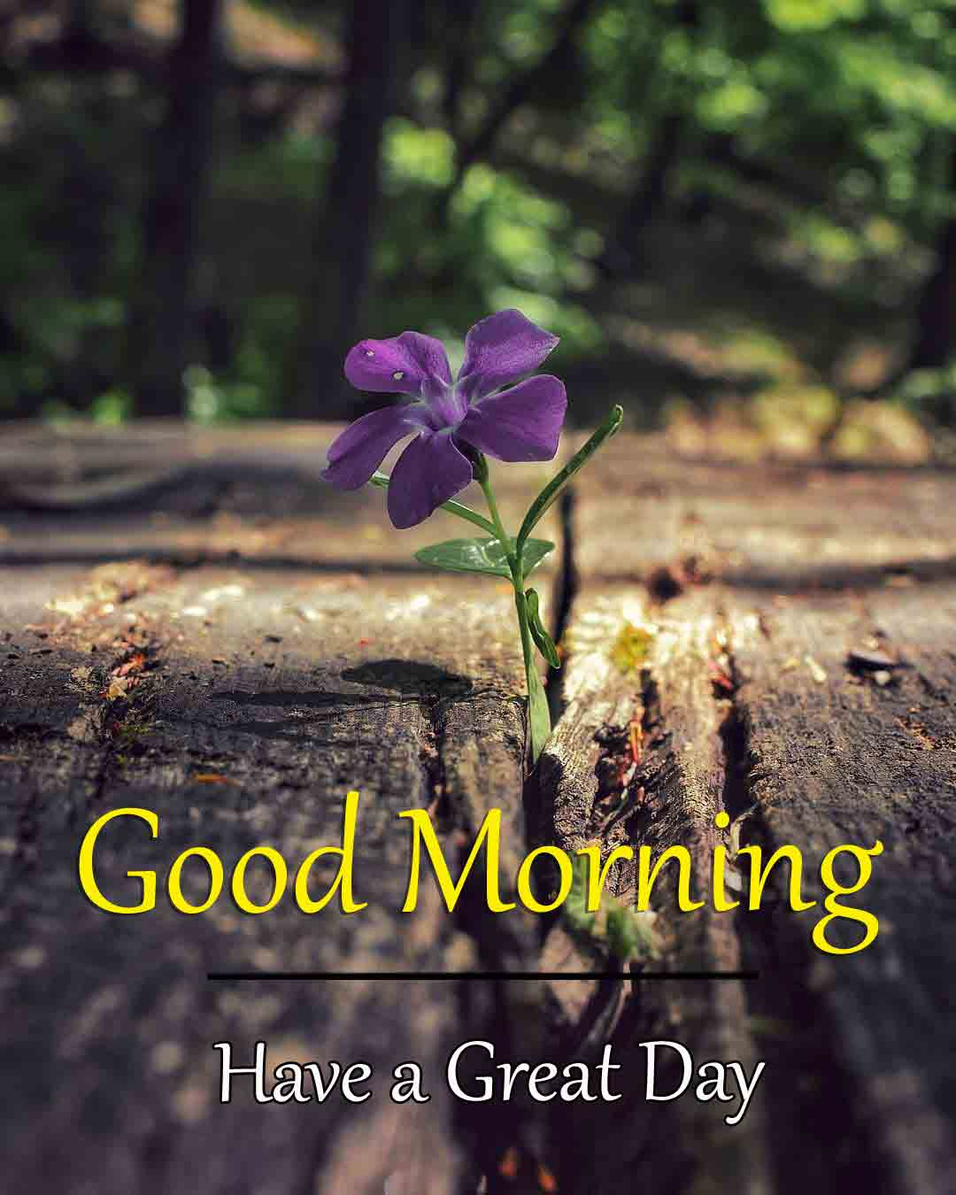 Best Quality Good Morning Dear Images