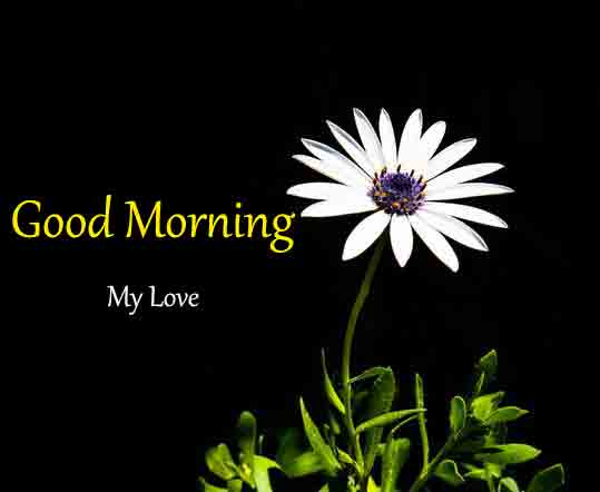 Best Quality Good Morning Dear Pictures
