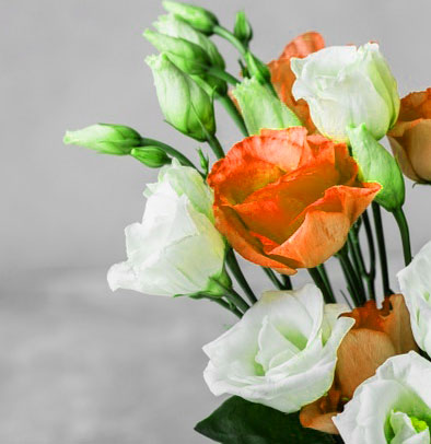 Best Quality HD Beautiful Flower Images for Whatsapp DP Images