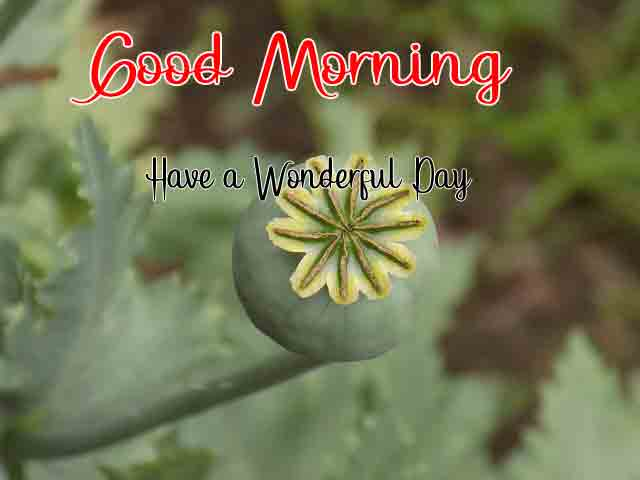 Best Quality HD Beautiful Love Good Morning Images