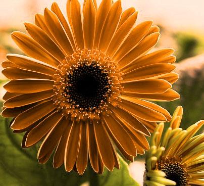 Best Quality HD Flower DP Images