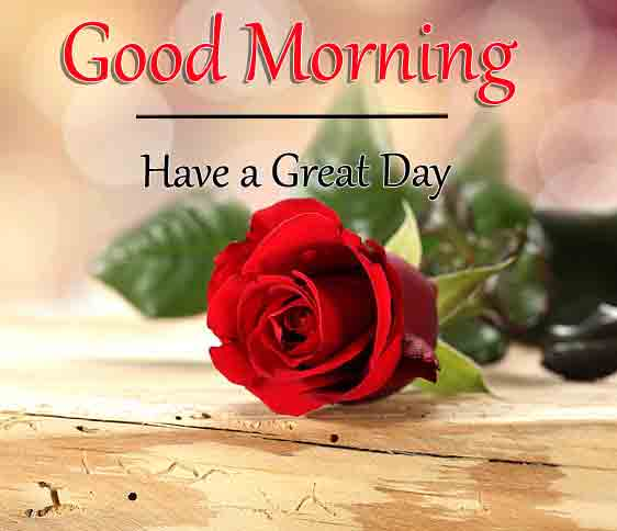 Best Quality Red Rose Love Good Morning Images Pics Download