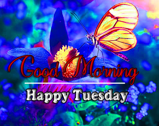 Best Quality Tuesday Good morning Images Free