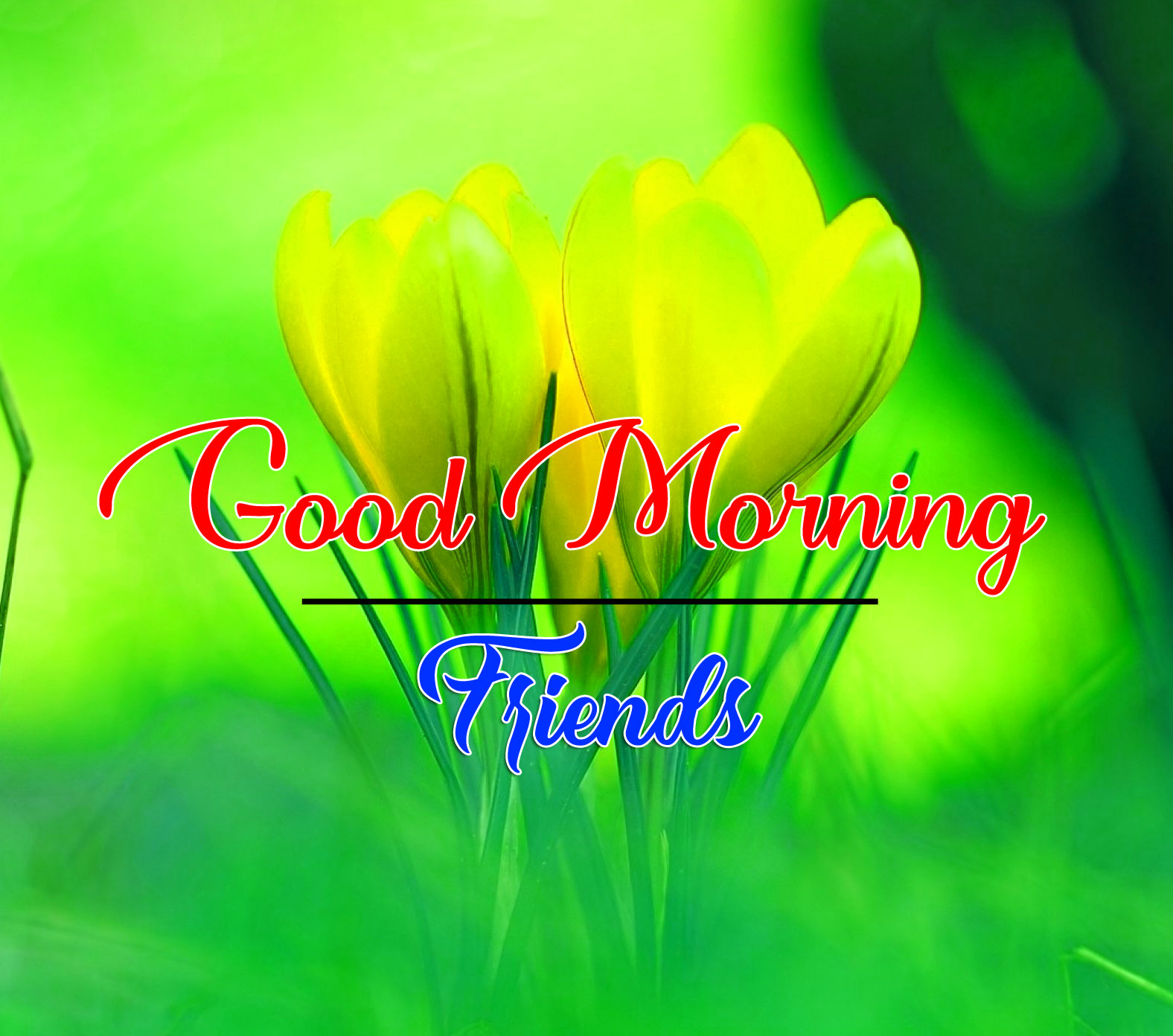 Best Quality good morning Whatsapp dp Images 4