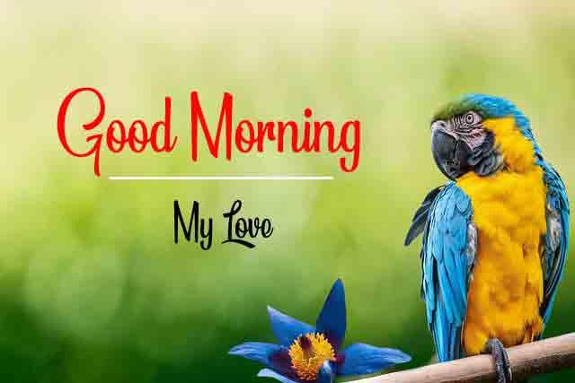 Bird Beautiful Love Good Morning Images