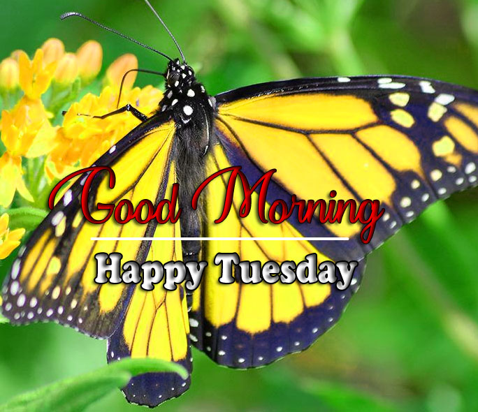 Butterfly Tuesday Good morning Images