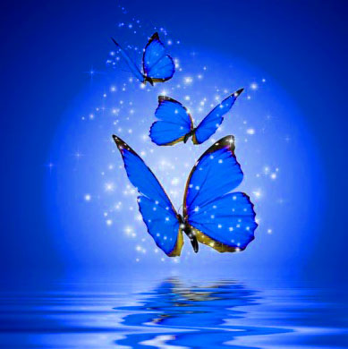 Butterfly best pic for dp Images