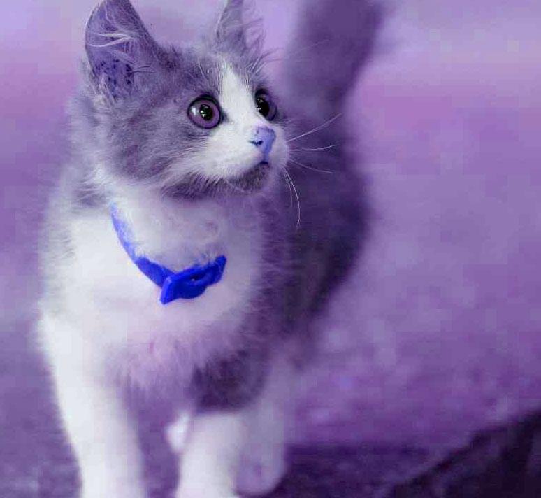 Cute Cat sweet whatapp dp Images