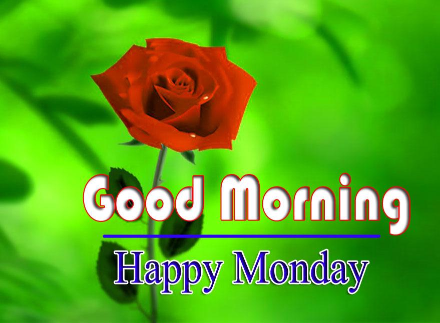 Fesh Red Rose Monday Good Morning Images 1
