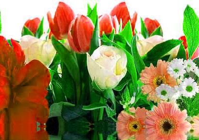 Flower DP Images friend