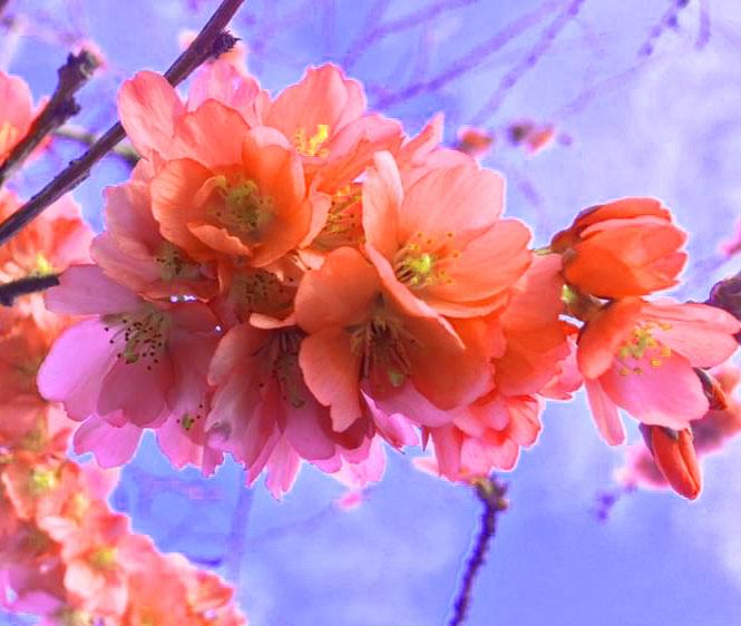 Flower DP Pics HD 2
