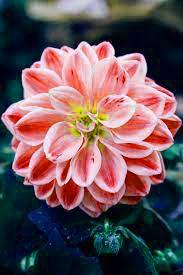 Flower DP Pics JHD