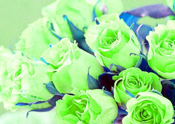 Flower DP Pics Wallpaper