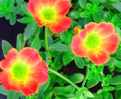 Flower DP Wallpaper HD