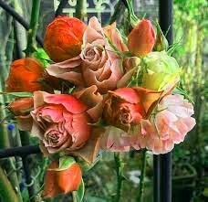 Flower DP Wallpaper