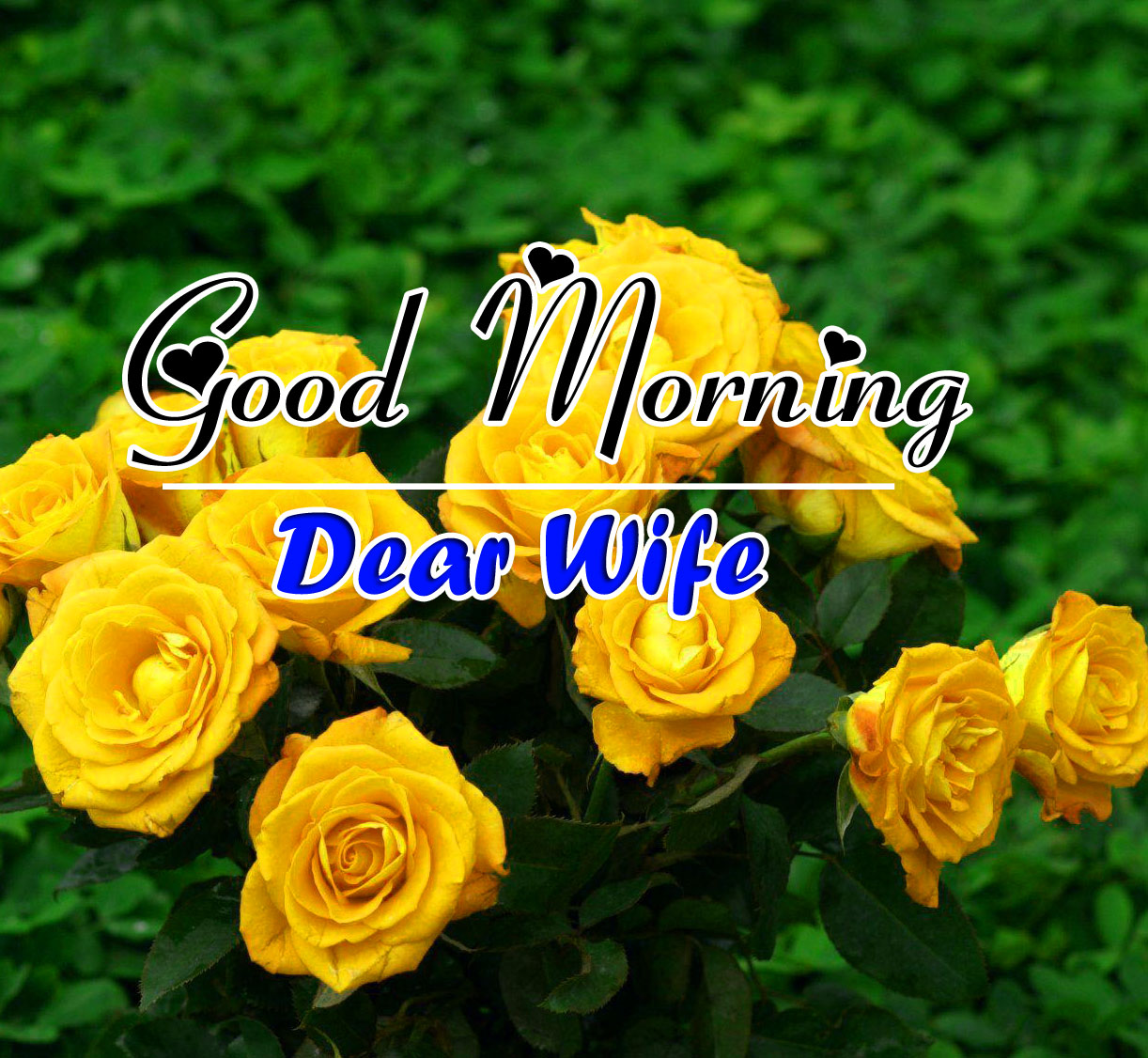 Flower Good Morning Wishes Images
