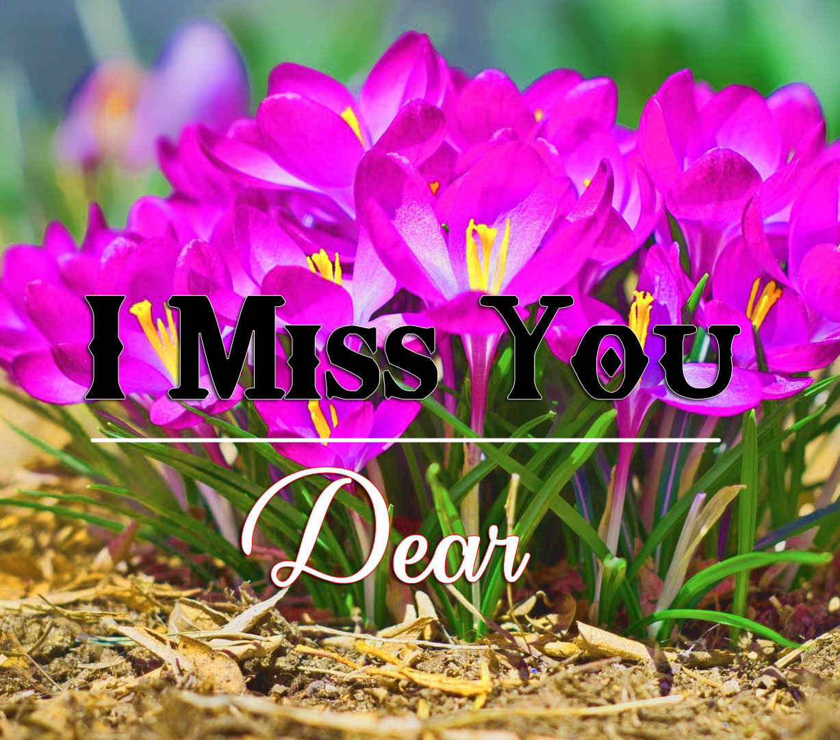 Flower HD I miss you Pictures