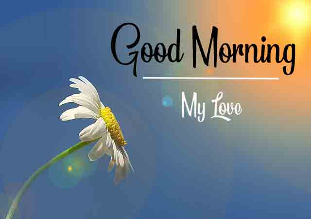Flower HD Love Good Morning Images Free