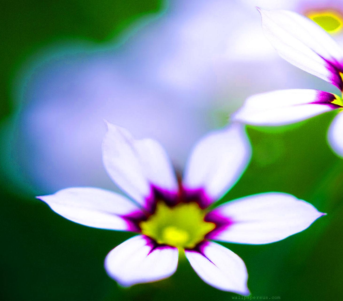 Flower Latest DP Images Pics 1