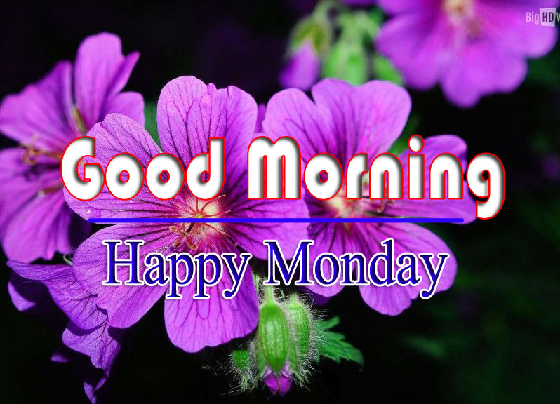 Flower Monday Good Morning Images 1