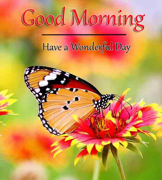 For Friend Good Morning Dear Images 2