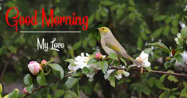 For Friend Good Morning Dear Images