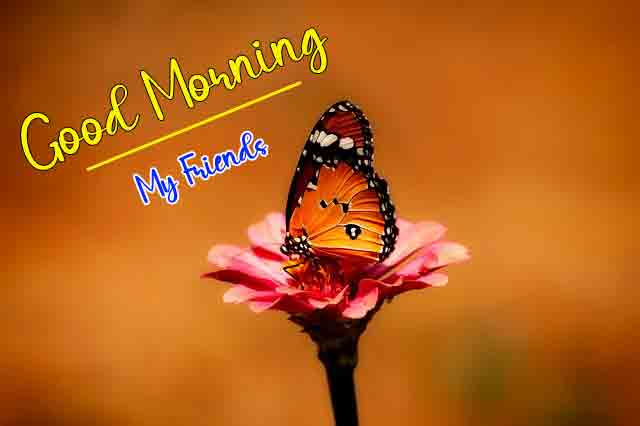 For Friend Quality Good Morning Dear Images