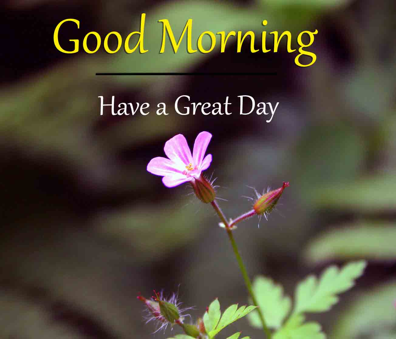 For Frined Good Morning Dear Images
