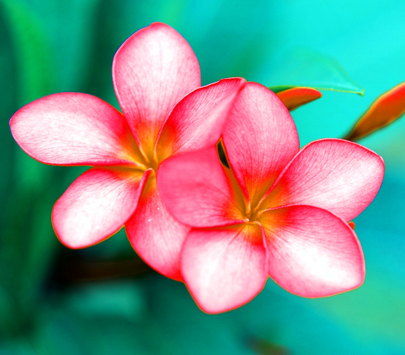 Free Beautiful Flower Images for Whatsapp DP Wallpaper