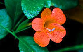 Free Best HD Flower DP Images