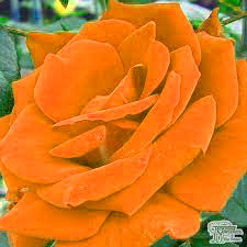 Free Best Quality Flower DP Images 2