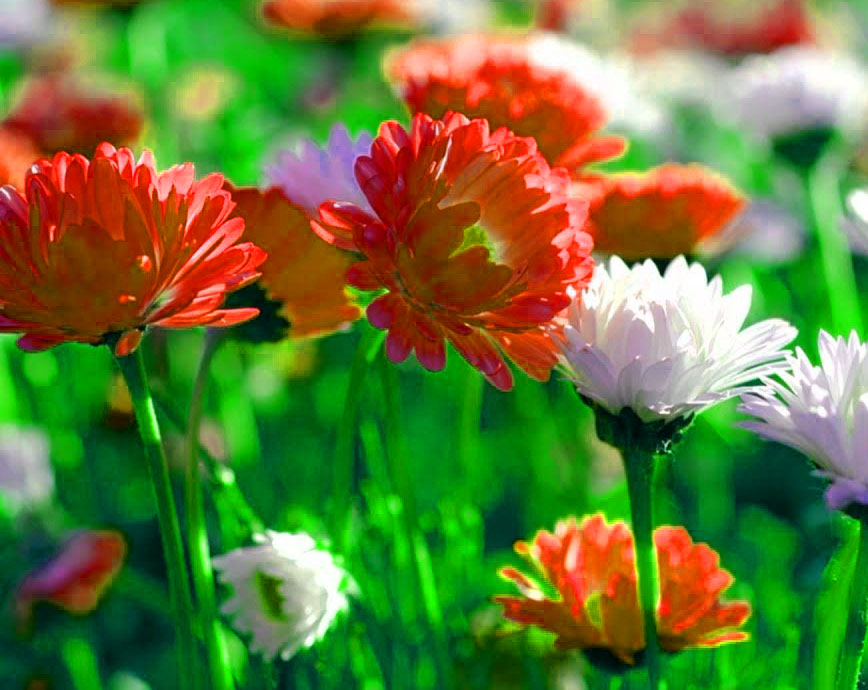 Free Best Quality Flower DP Images 3