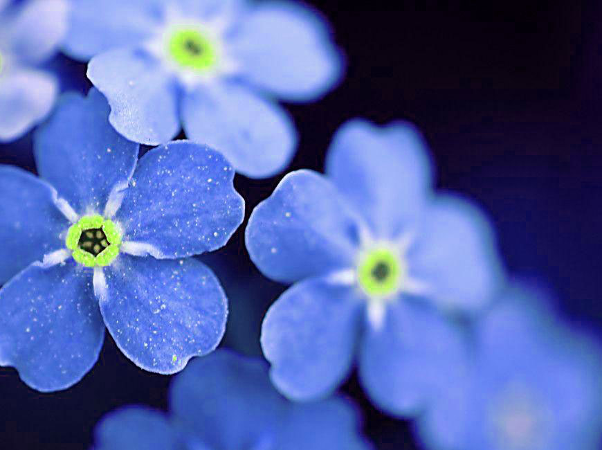 Free Best Quality Flower DP Images 4