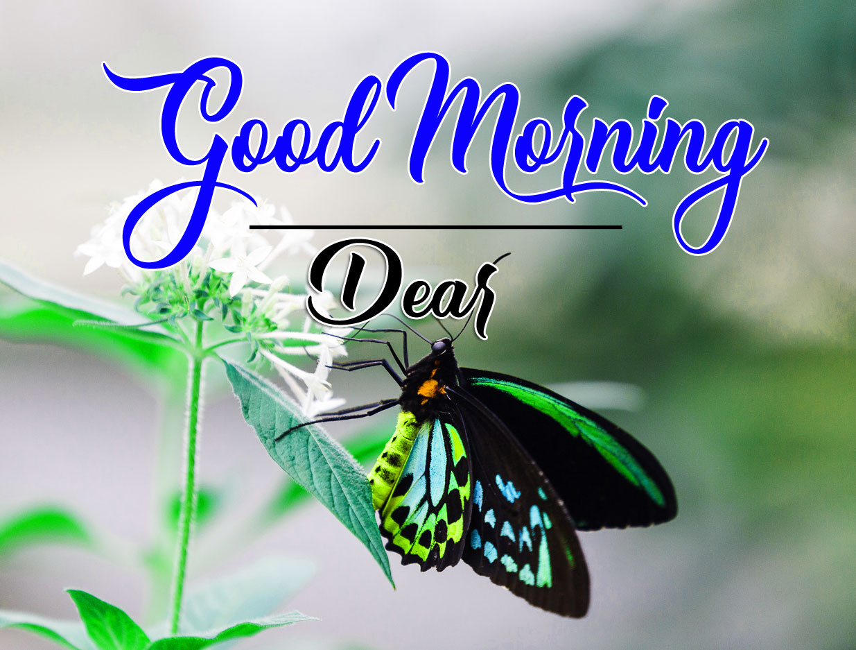Free Best Quality good morning Whatsapp dp Images 2