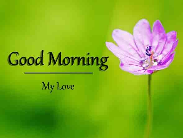 Free Flower Good Morning Dear Images 2021