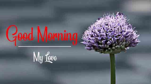 Free Fresh Beautiful Love Good Morning Images 2021