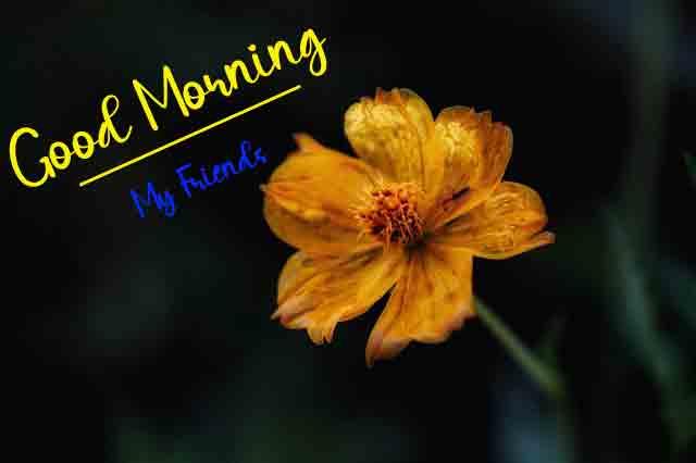 Free Good Morning Wallpaper