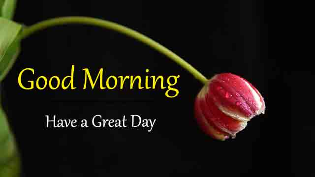Free HD Good Morning All Images 2