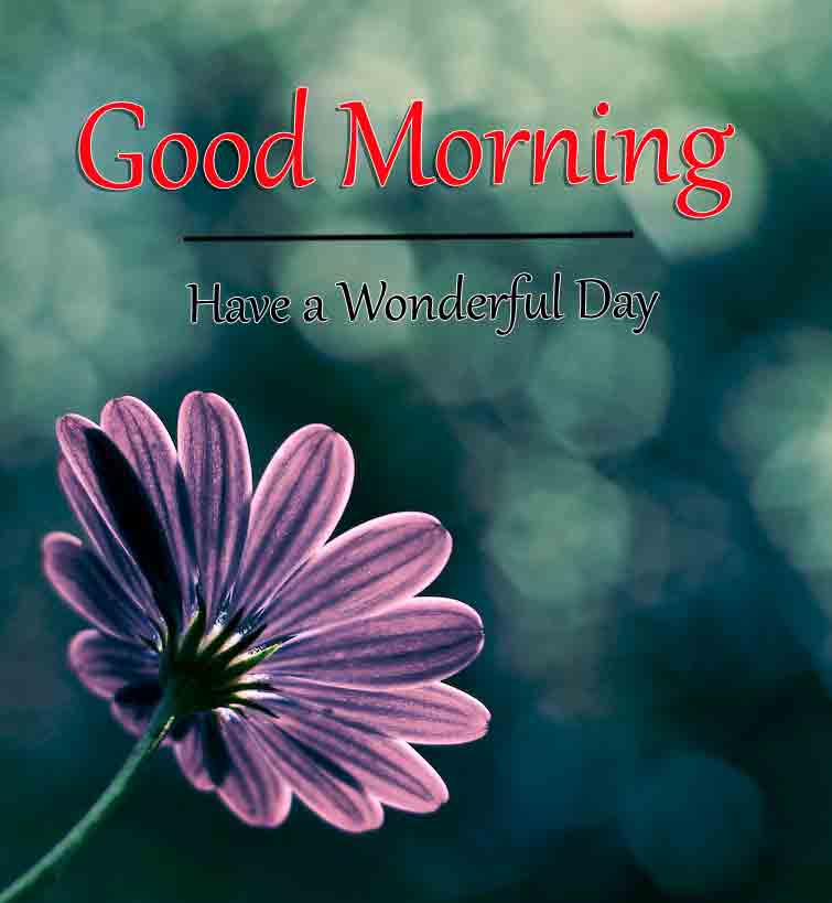 Free HD Good Morning Dear Images 2