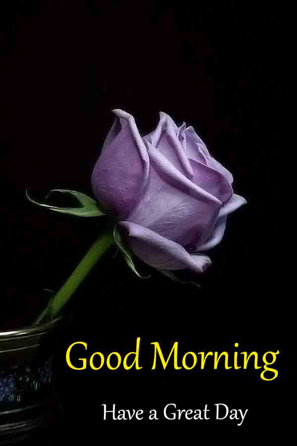 Free HD Good Morning Dear Images