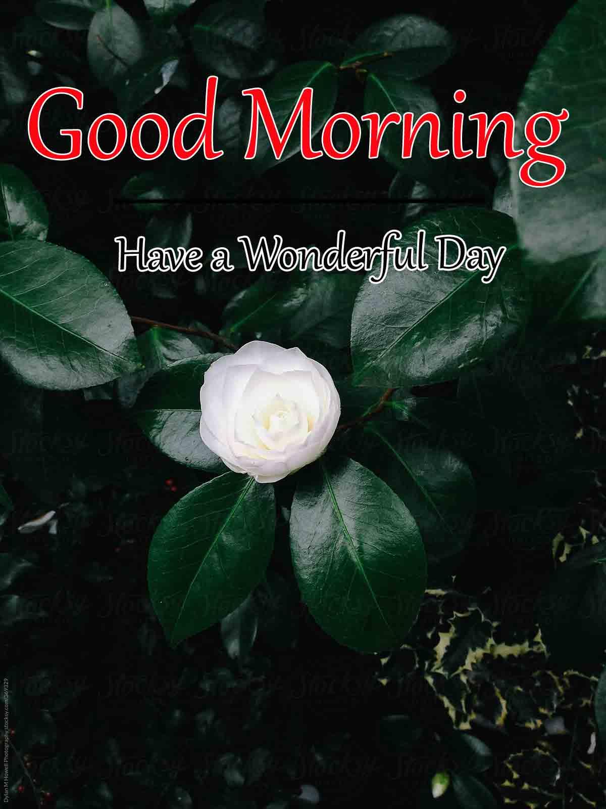 Free HD Good Morning Dear Wallpaper