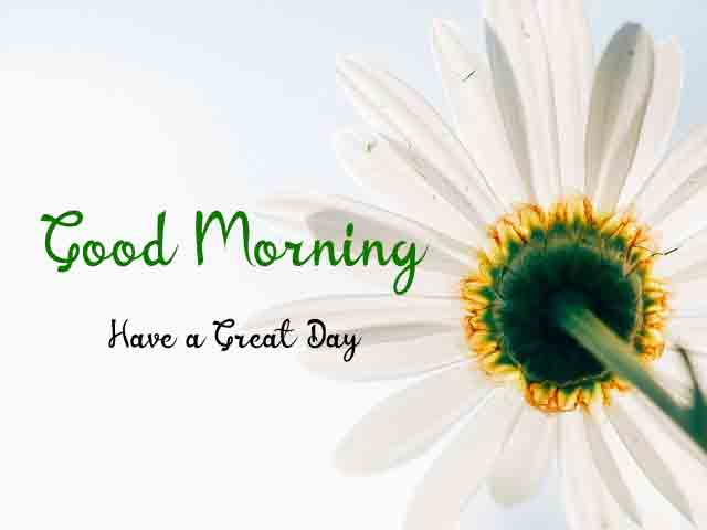 Free HD Good Morning Images 1