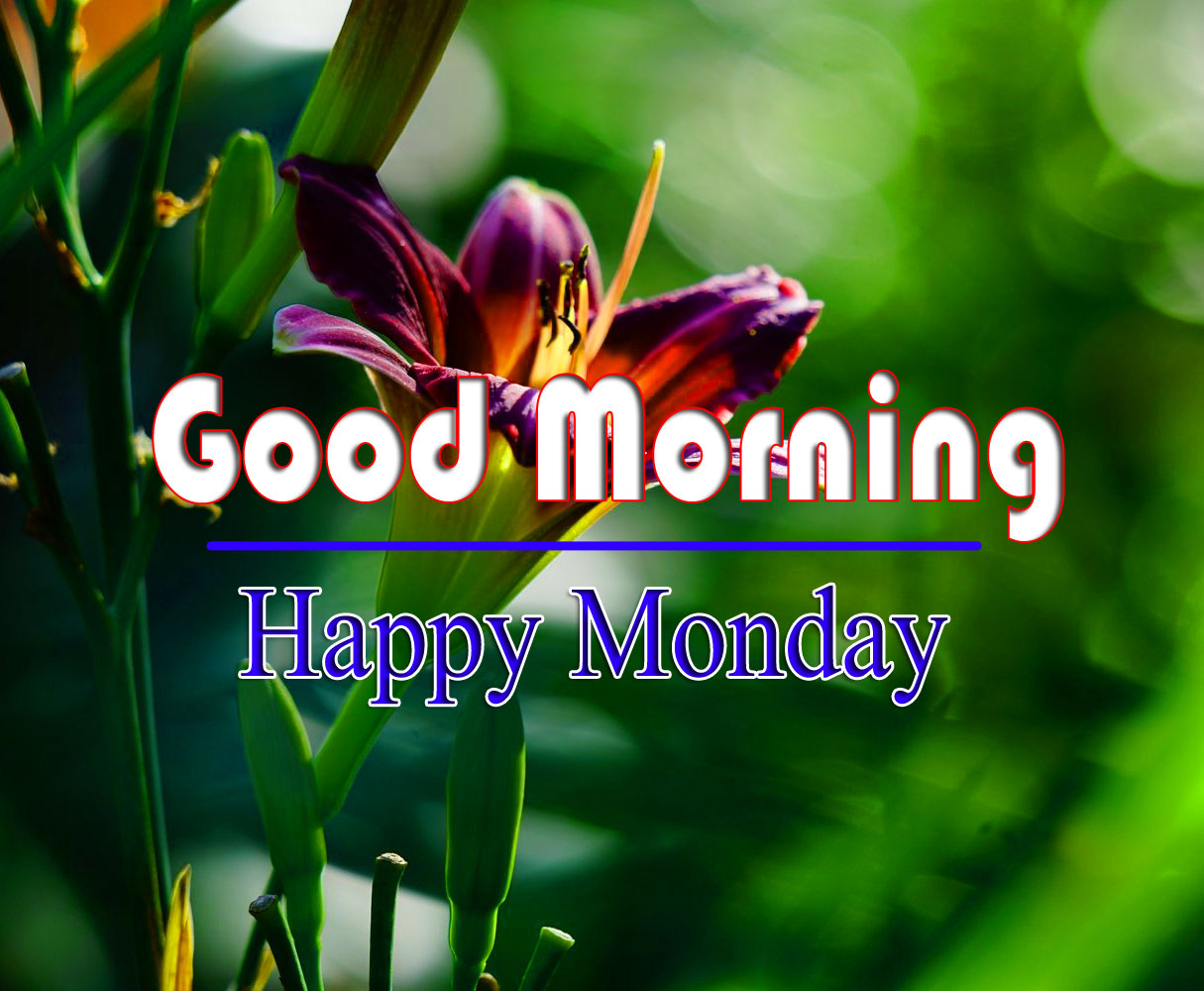 Free HD Monday Good Morning Images Pics 1