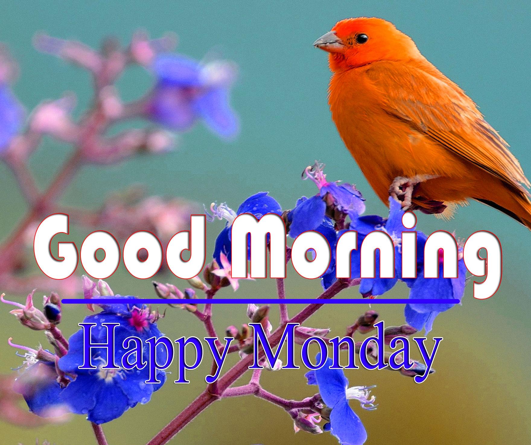 Free HD Monday Good Morning Pics 1
