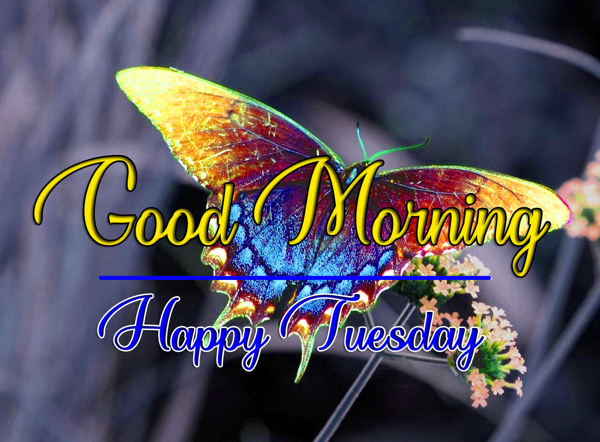 Free HD Tuesday Good morning Images 2021